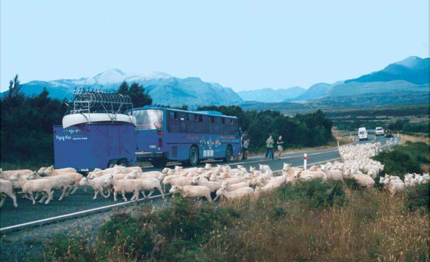 Traffic jam New Zealand style 2001 Photo taken by: Unknown