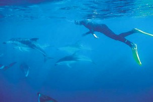 Swim with dolphins in the pacific ocean