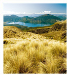 customn new zealand tour