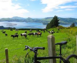 rural cycling in new zealand